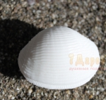Мыло Ракушка Большая 3D